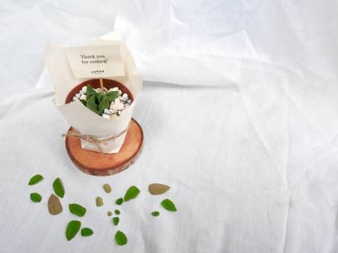 Succulent in Basic Plastic Planter for 50pcs